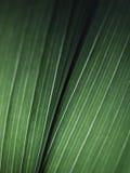 Вены лист Стоковое фото RF