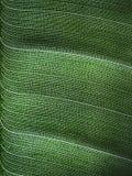 Вены лист Стоковые Фото
