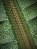 Вены лист Стоковое Изображение RF