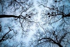Вены неба Стоковое Фото