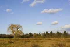 верба вала сельской местности Стоковое фото RF