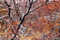 верба картин ветвей Стоковое Фото