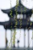 верба листьев Стоковое фото RF