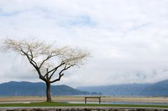 верба озера облицовки стенда изолированная harrison Стоковые Изображения RF