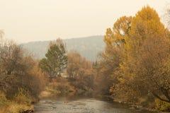 Верба осени рекой цветастые валы Сибирский лес Стоковое Изображение RF