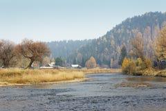 Верба осени рекой цветастые валы Сибирский лес Стоковое Изображение