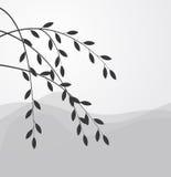 верба силуэта ветви Стоковые Изображения RF