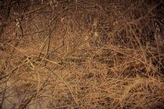 Верба pussy весны Стоковая Фотография RF