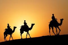 3 верблюда на заходе солнца Стоковые Фотографии RF