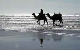 2 верблюда на пляже Стоковая Фотография RF