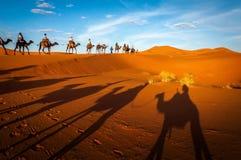 Верблюды trekking экскурсии в пустыне Сахары Merzouga Марокко стоковые изображения