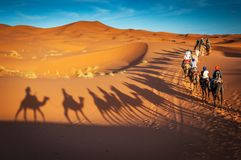 Верблюды trekking экскурсии в пустыне Сахары Merzouga Марокко стоковые фотографии rf