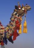 верблюд богато украшенный стоковое изображение rf