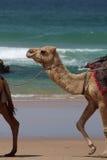 Верблюд гуляя на пляж с волнами Стоковое Изображение