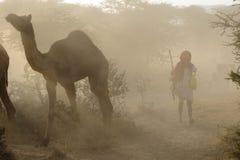 верблюд далеко pushkar Стоковое Фото
