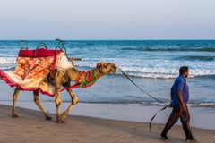 Верблюд для езды на пляже Стоковые Фотографии RF