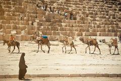 Верблюд Стоковые Фото