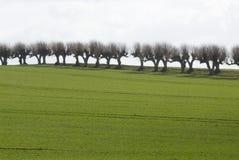 вербы горизонта Стоковые Фото