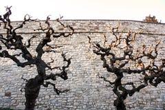 Вербы и стены Стоковые Изображения
