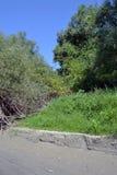 Вербы острова стоковое фото rf