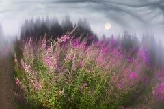 Верб-чай на зоре Стоковые Изображения