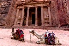 2 верблюда бедуина перед ` al-Khazneh ` казначейства Стоковые Фото