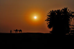 2 верблюда в пустыне на заходе солнца Стоковые Изображения RF