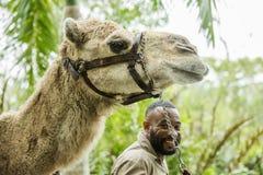 Верблюд в зоопарке в Неаполь, верблюд укрывает на заднем плане Флорида Стоковое фото RF