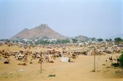 Верблюд справедливый, Pushkar Индия Стоковые Фото