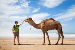 Верблюд и турист стоковая фотография rf
