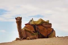 Верблюд на песчанной дюне стоковое изображение