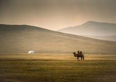 Верблюд пересекая обширный ландшафт с yurt & x28; ger& x29; и горы в предпосылке Стоковые Фотографии RF