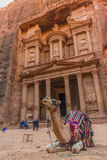 Верблюд перед казначейством Petra Стоковое фото RF