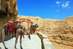 Верблюд дромадера в красивом одеяле Стоковая Фотография