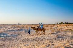 Верблюд дромадера в пустыне Сахары, Тунисе, Африке Стоковая Фотография RF