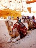 Верблюд 2 сидя на пустыне Petra стоковая фотография