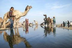 Верблюд справедливое Pushkar 2015 Стоковое фото RF