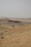 Верблюды в пустыне Стоковые Фотографии RF