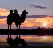 Верблюд humped силуэтом Стоковое Изображение