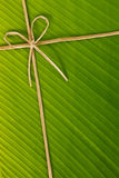 веревочка листьев банана Стоковое Изображение RF