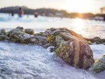 Веревочка пляжа Стоковая Фотография RF