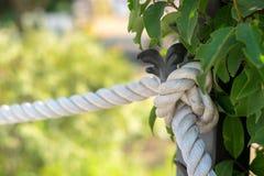 Веревочка с узлом стоковая фотография rf