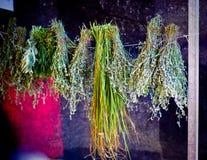 веревочка травы стоковая фотография