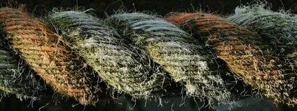 веревочка Стоковые Изображения RF