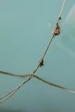 Веревочки моря Стоковые Изображения RF