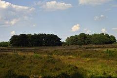 Вересковая пустошь в Голландии Стоковые Изображения RF