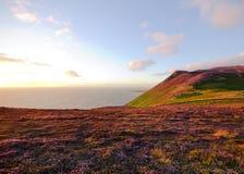 Вереск в цветени Вересковые пустоши острова Мэн Стоковая Фотография RF