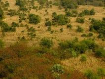 Вереск луга травы дерева сухой scrubforest Стоковые Фото