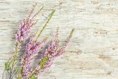Вереск на старой древесине Стоковое Изображение RF