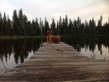 Верная собака ожидая возвращения его предпринимателя стоковое изображение
